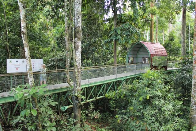 Sun Bear Centre Sepilok Sabah Borneo